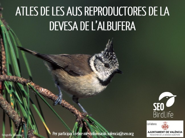 0414Cartell Atles Aus Reproductores 01 (2)