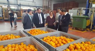 La exportación de frutas de la Comunitat crece un 5,2% respecto a enero-febrero de 2015