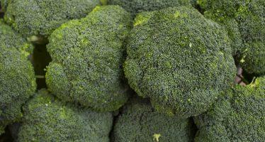 El brócoli aporta una tercera parte del ácido fólico que las embarazadas necesitan al día