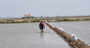 Agricultura ayuda a los arroceros a proteger del cucat sus cultivos