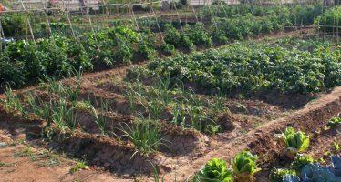 València s'adhereix a la Xarxa de Ciutats per l'Agroecologia