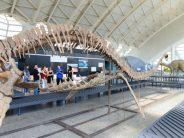 El Museu de les Ciències amplía en verano las visitas guiadas en la exposición de Tesla