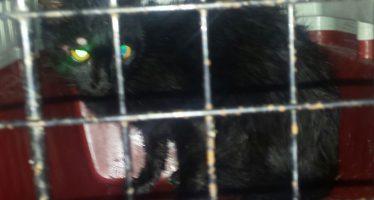 La policía local rescata un gato atrapado en una cornisa de un cuarto piso