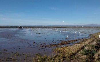 La reutilización de aguas en la depuradora de Pinedo y los efectos de la quema de la paja del arroz, a debate
