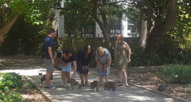 La concejalía de Bienestar Animal realiza el primer centenar de esterilizaciones felinas