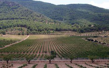 El Consell elimina parte de las contribuciones del sector agroalimentario