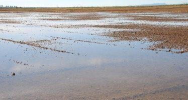 El milenario cultivo del arroz
