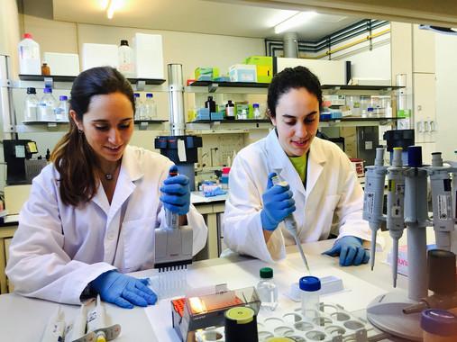 Maria Ibars (izquierda) y Andrea Ardid (derecha), estudiantes predoctorales autoras del artículo, en el laboratorio del departamento de Bioquímica y Biotecnología. / URV