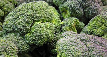 El brócoli puede ayudar a prevenir los problemas de salud en Navidad