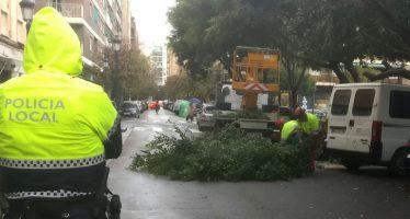 El Ayuntamiento de Valencia apuesta por alcorques más grandes para evitar caídas masivas de árboles