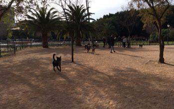 Valencia cuenta con cuatro nuevas zonas de socialización de perros