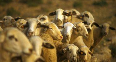 Agricultura garantiza la seguridad sanitaria de la cabaña ganadera a través del Plan Zoosanitario