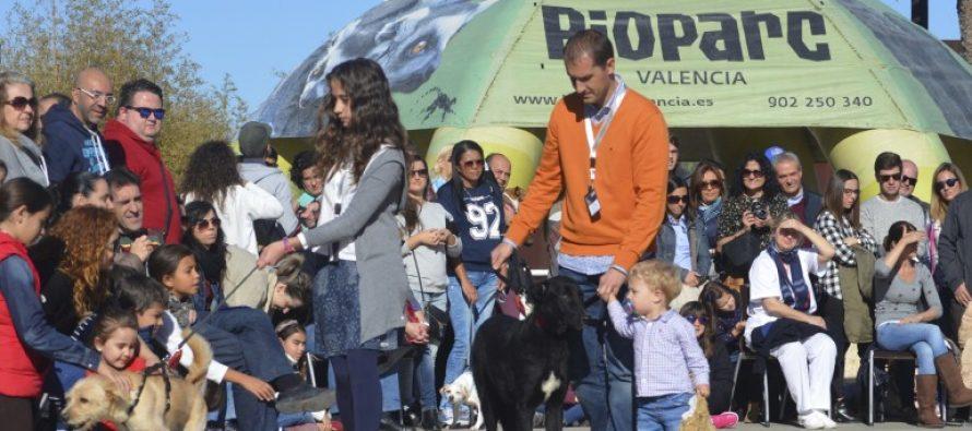 El desfile solidario de perros de AUPA y Bioparc Valencia será el 15 de enero