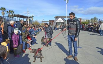 La sociedad valenciana se vuelca en el desfile organizado por AUPA y Bioparc Valencia