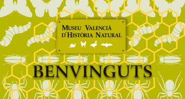 Cultura reconoce el Museo de Historia Natural de Alginet