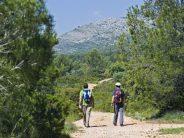 El Consell declara nuevas zonas especiales de conservación en Red Natura 2000