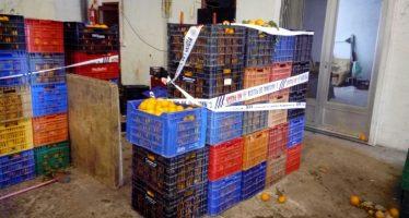 La Policía de la Generalitat interviene 7.000 kilos de naranjas en un almacén clandestino de Sagunto