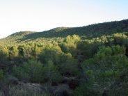 El Consell tramita la declaración de Sierra Escalona como parque natural