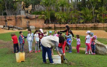 Bioparc Valencia empieza la semana de Pascua con 'Expedición África', la escuela de vacaciones