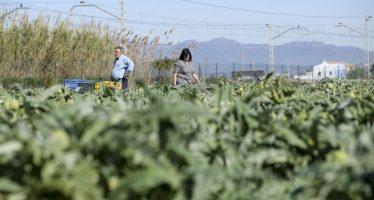 La renta agraria valenciana se mantiene en torno a 1.900 millones de euros