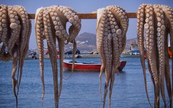 El Consell actualiza la normativa para la pesca del pulpo