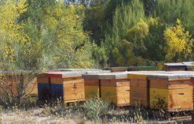 Agricultura convoca ayudas por 1,4 millones para mejorar la producción y comercialización de miel
