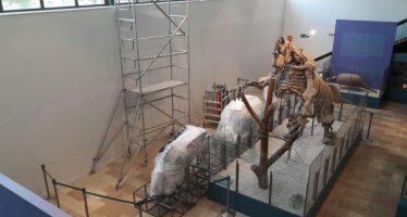 Empieza la adecuación de las instalaciones del Megaterio del Museo de Ciencias Naturales