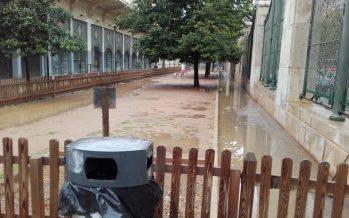 El Ayuntamiento de València inicia la remodelación de la zona para perros de Abastos