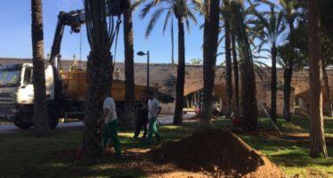 València anuncia la plantació de mes de 1.200 arbres en els carrers de la ciutat