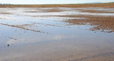 El Ayuntamiento de València invierte más de un millón en encontrar una solución a la paja de arroz