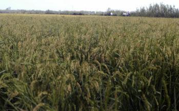 El Consell destinará 195.000 euros para supervisar la producción agrícola integrada