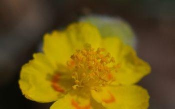 El Consell declara cuatro microrreservas de flora en la provincia de Alicante
