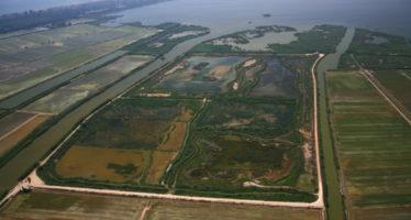 València destina 47.500 euros a la conservació del Tancat de la Pipa en l'Albufera
