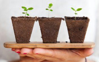 Cormoran Joyeros pregunta a los internautas a qué proyecto ecológico quieren que se done el 3% de sus beneficios
