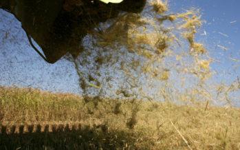 Agricultura apuesta por el uso de la paja de arroz para recuperar zonas quemadas
