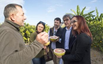Maria Josep Amigó presenta la colaboració de la Diputació amb l'Hort Botànic El Bartolí