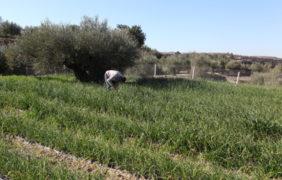 El Consell destina 750.000 euros a las primeras ayudas a la certificación ecológica