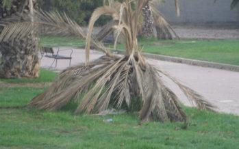 València tanca parcs i jardins pel fort vent