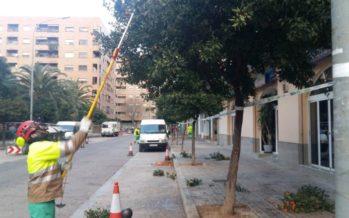 Se inicia la recogida de naranjas amargas en las calles y jardines de València