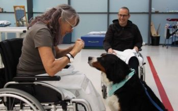 La Fe y Maskokotas firman un acuerdo para el cuidado de los perros de asistencia