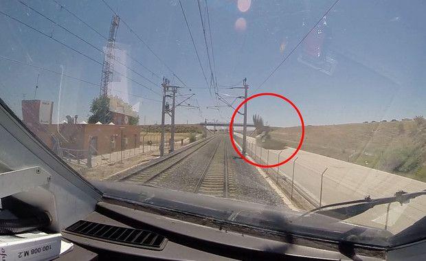 Un avión común (Delichon urbicum) poco antes de ser atropellado por un tren de alta velocidad. / García de la Morena et al.