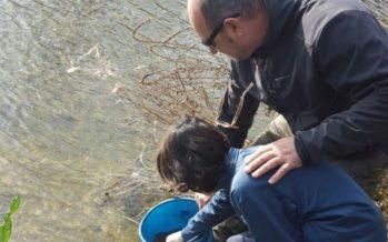 Suelta de Anguilas en el río Serpis a su paso por Villalonga