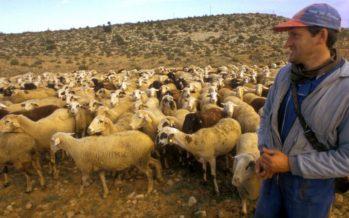El Consell fomentará el pastoreo para prevenir los incendios forestales