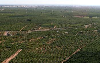 Aumenta en 518 hectáreas la superficie de tierras arables de la Comunitat Valenciana