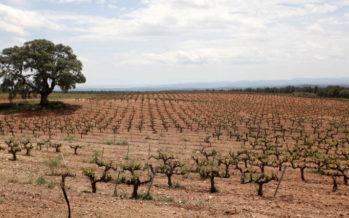 Ayudas al sector vitivinícola para la promoción en mercados de terceros países