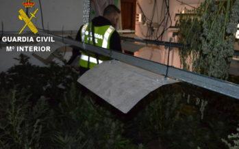 La Guardia Civil desmantela una plantación de marihuana en Carcaixent