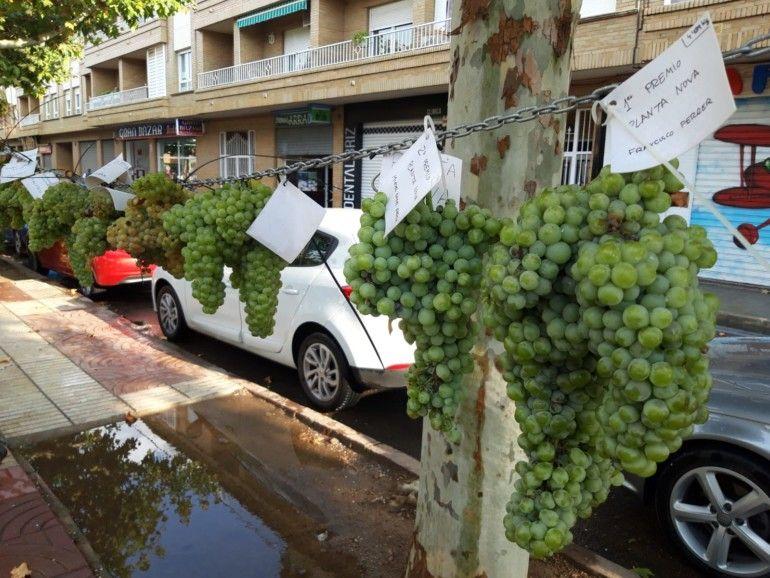 Racimos de uva blanca expuestos en la Fiesta de la Vendimia, Requena (Valencia)