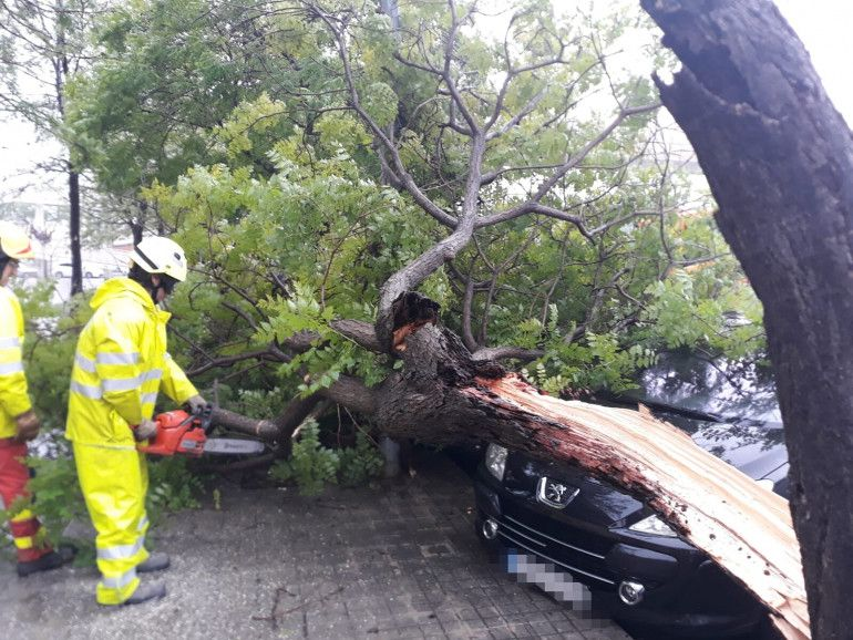 temporal árbol caído Aldaia