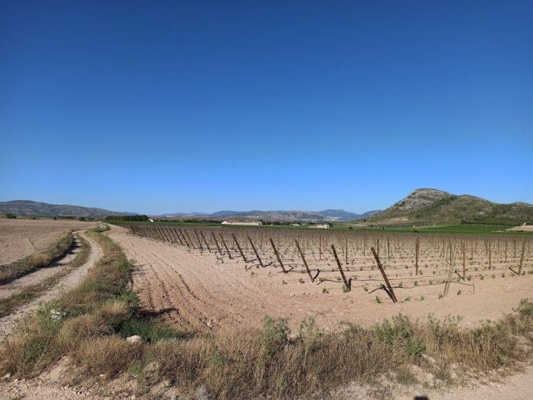Sustitución de cultivo cerealista por viñedos en espaldera