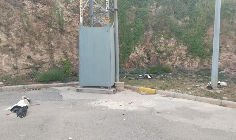 Tres cigüeñas halladas en agosto de 2020 junto a un poste de un tendido eléctrico valenciano sin elementos de protección, con síntomas de haber sufrido una electrocución